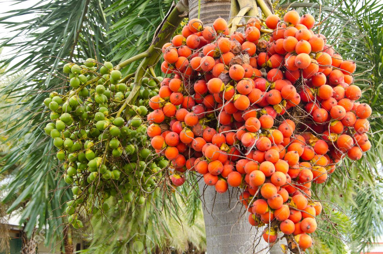 Organic  Areca Nut